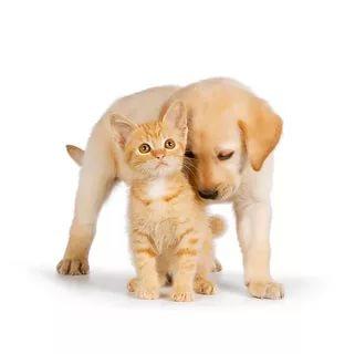 بالصور قطط وكلاب , صور لكلاب وقطط اشقية 3940 6