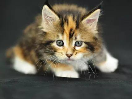 بالصور قطط وكلاب , صور لكلاب وقطط اشقية 3940 7