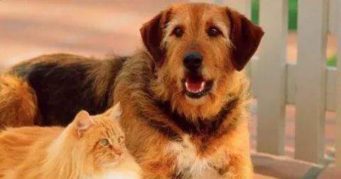 بالصور قطط وكلاب , صور لكلاب وقطط اشقية 3940 9