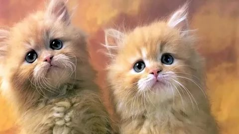 صور قطط وكلاب , صور لكلاب وقطط اشقية