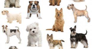 صورة انواع الكلاب , ما لا تعرفه عن عالم الكلاب