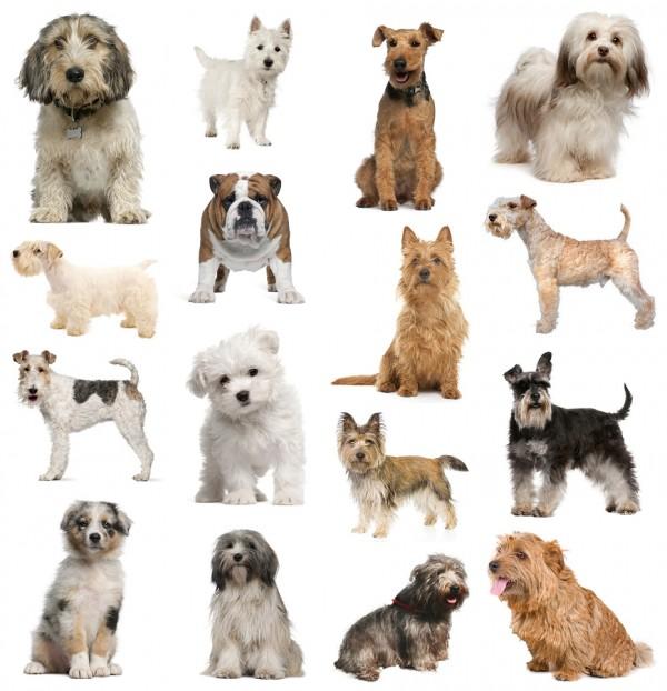 صوره انواع الكلاب , ما لا تعرفه عن عالم الكلاب