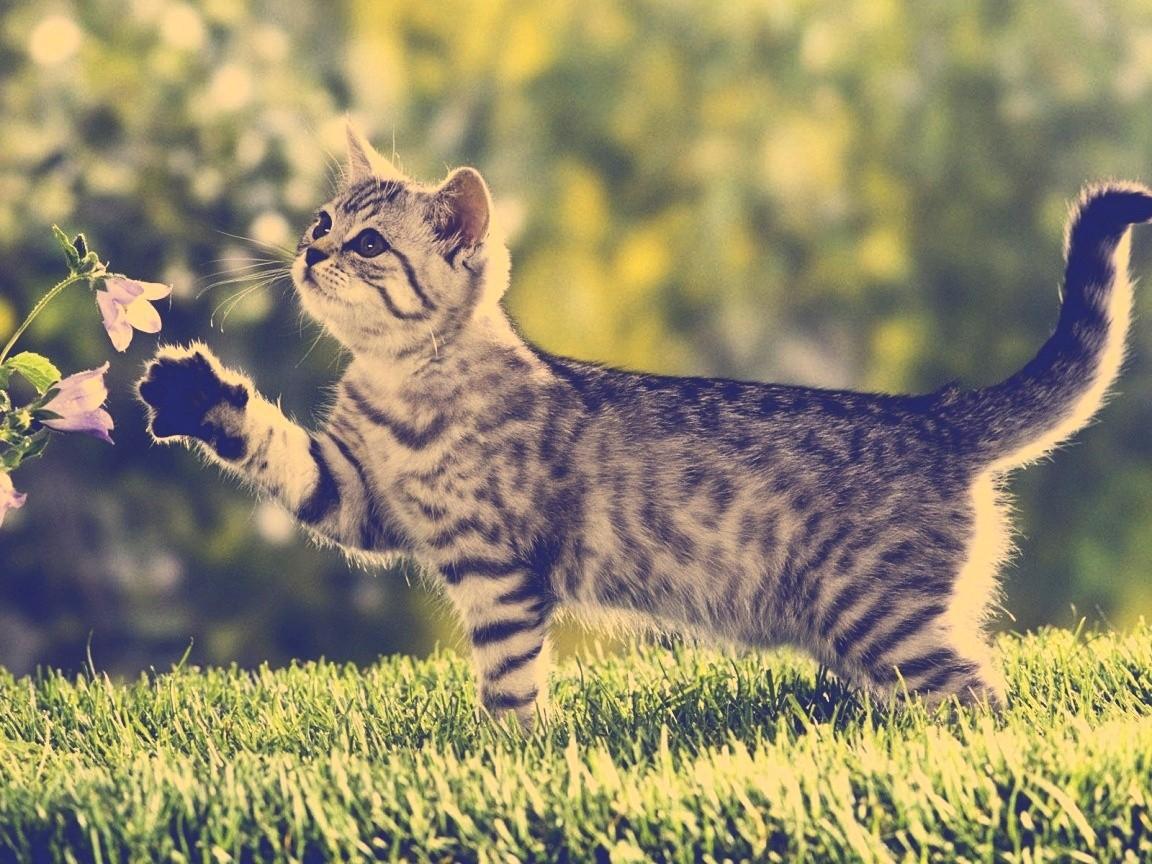 صوره اجمل صور قطط , قطط شقية وحلوة