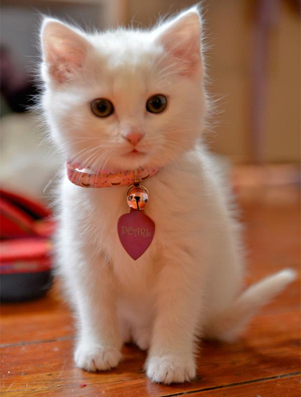 بالصور اجمل صور قطط , قطط شقية وحلوة 4161 10