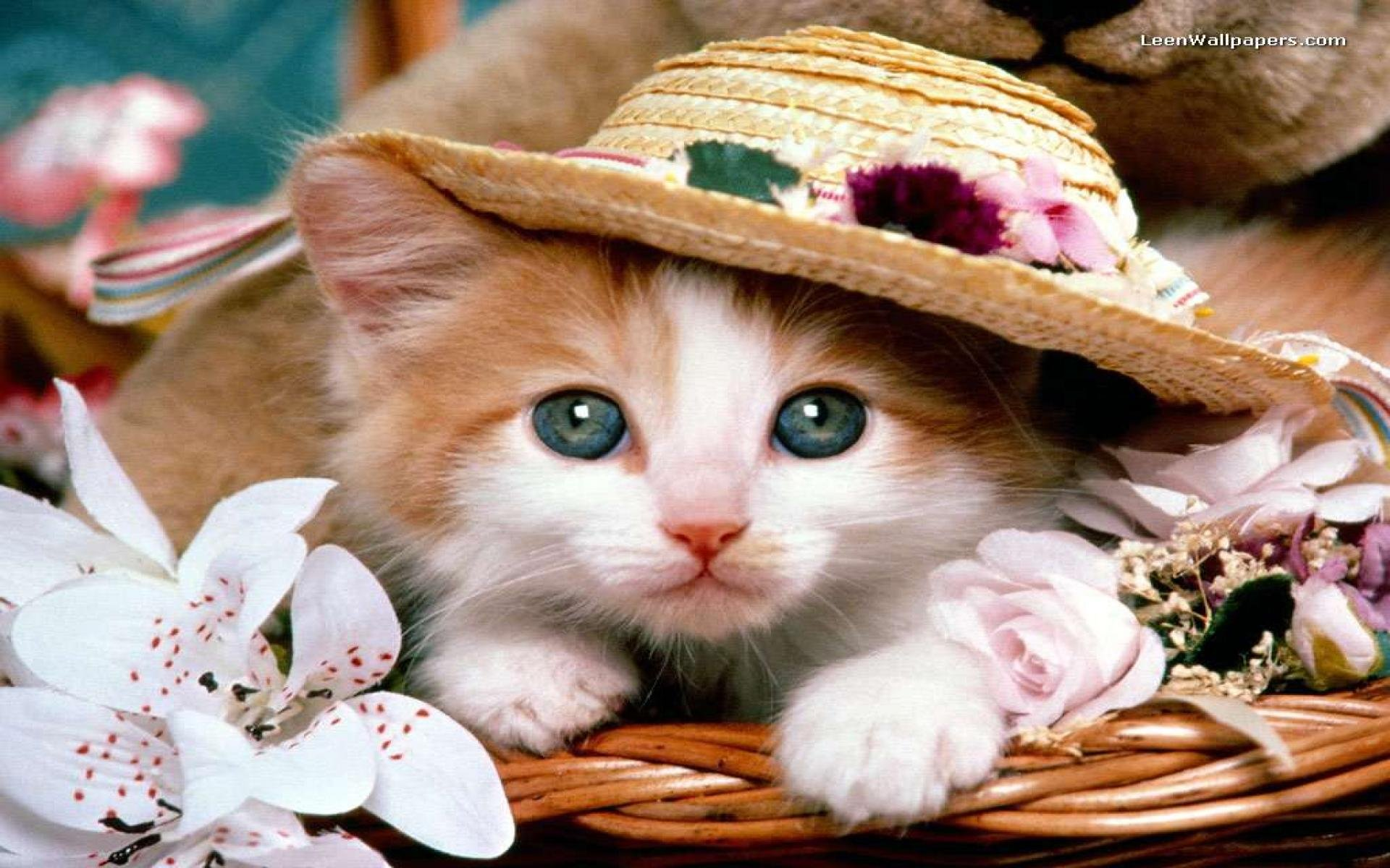 بالصور اجمل صور قطط , قطط شقية وحلوة 4161 13