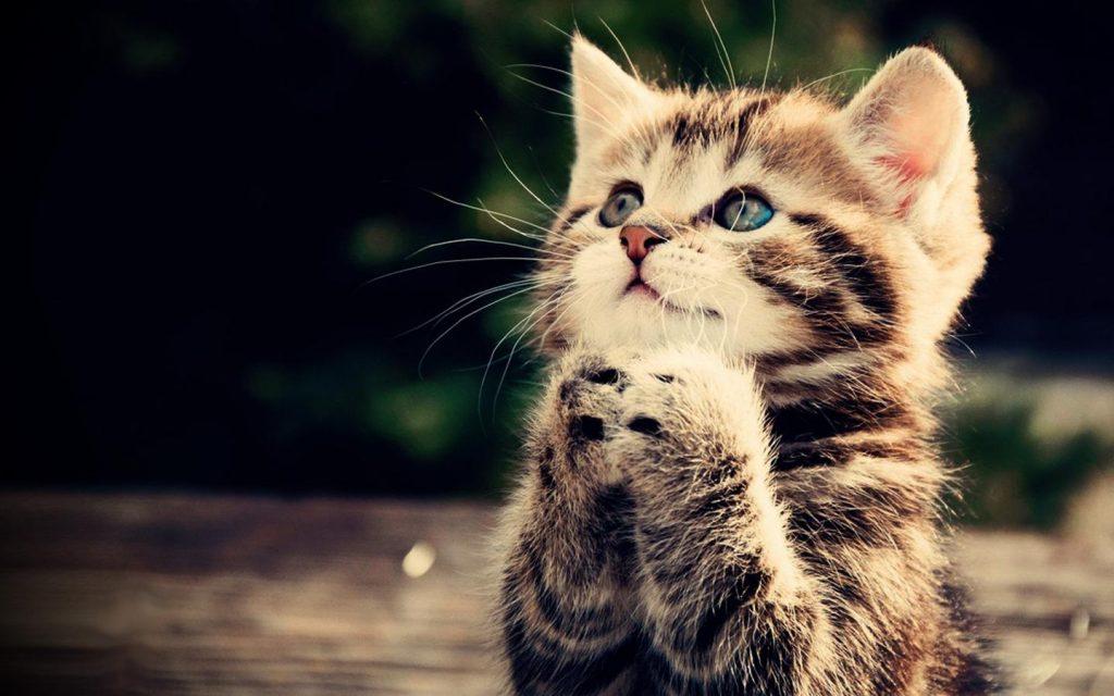 بالصور اجمل صور قطط , قطط شقية وحلوة 4161 15