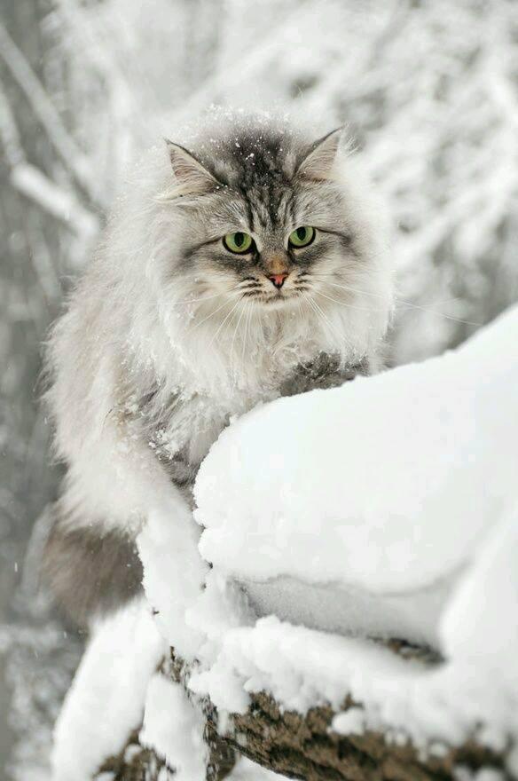 بالصور اجمل صور قطط , قطط شقية وحلوة 4161 3