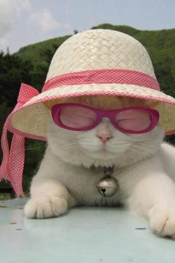 بالصور اجمل صور قطط , قطط شقية وحلوة 4161 4