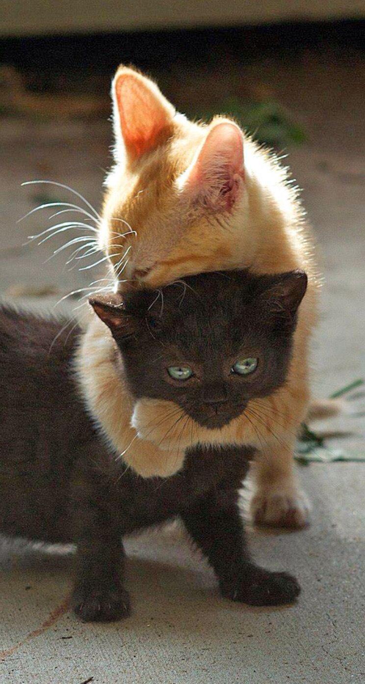 بالصور اجمل صور قطط , قطط شقية وحلوة 4161 5