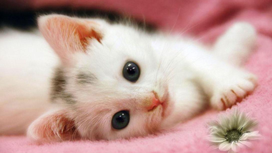 بالصور اجمل صور قطط , قطط شقية وحلوة 4161 9