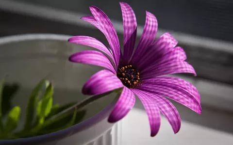 بالصور زهور الحب , اشتري ورد من اجل الحب 4179 10