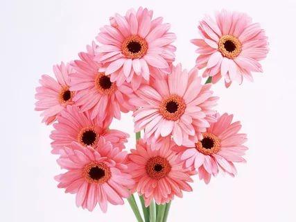 بالصور زهور الحب , اشتري ورد من اجل الحب 4179 13