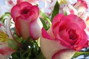 بالصور زهور الحب , اشتري ورد من اجل الحب 4179 14 310x205