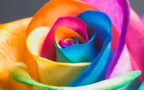 بالصور زهور الحب , اشتري ورد من اجل الحب 4179 8