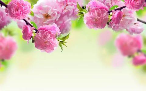 بالصور زهور الحب , اشتري ورد من اجل الحب 4179 9