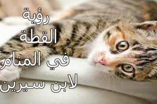 صورة تفسير حلم قطه تعض رجلي , ما معنى القطة فى الحلم