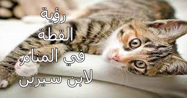 صور تفسير حلم قطه تعض رجلي , ما معنى القطة فى الحلم