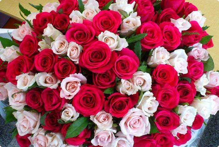 صورة صور زهور رائعة , احلى صور الزهور