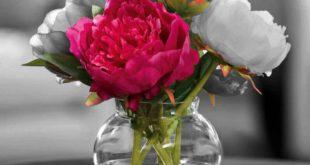 بالصور صور زهور رائعة , احلى صور الزهور 14391 12 310x165