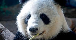 صورة بحث عن الحيوانات المهددة بالانقراض , حيوانات علي وشك الانقراض