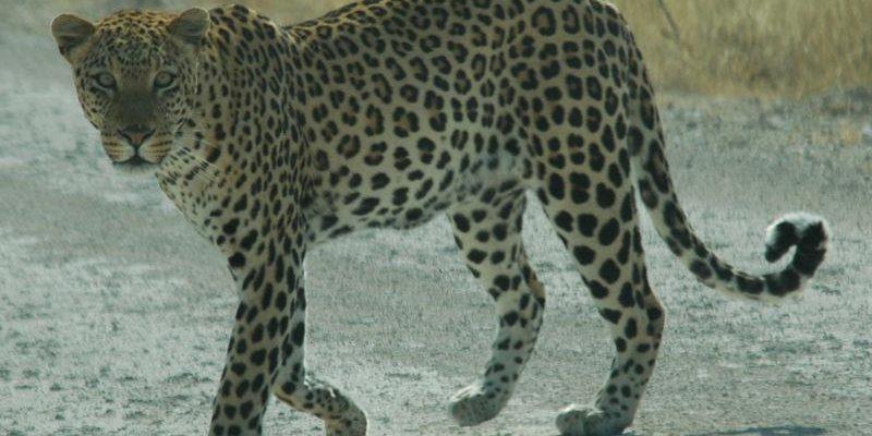 بحث عن الحيوانات المهددة بالانقراض , حيوانات علي وشك ...