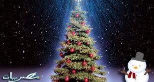 بالصور تزيين شجرة الكريسماس , شكال مختلفة لشجرة الكريسماس 14607 12 310x165