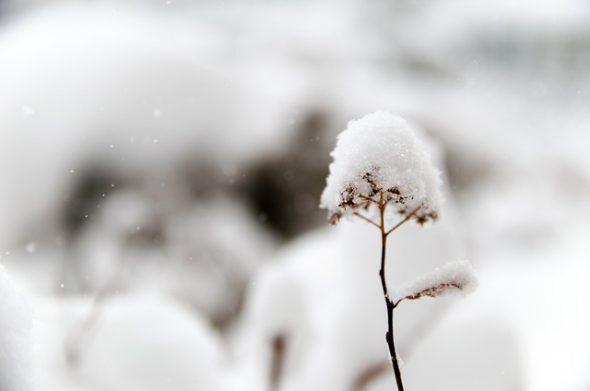 صورة البرد في الحلم , ما دلالة هذا فى الاحلام