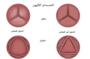 صورة اسماء صمامات القلب , القلب هو اساس الجسم