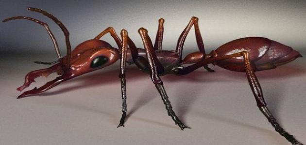 بالصور كم رجل للنملة , هل تمتلك النملة ارجل 14571 2
