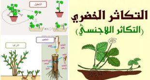 صور التكاثر اللاجنسي في النبات , من اهم المعلومات العلمية