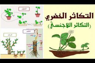 صورة التكاثر اللاجنسي في النبات , من اهم المعلومات العلمية