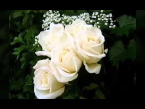 صورة صور عن الورد , سر الورد والرومانسيه