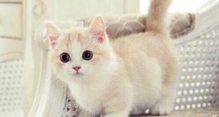 صور صور قطط كيوت , قطط تخطف القلب