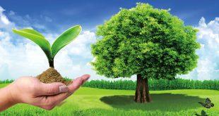 صورة صور عن البيئة , الحفاظ علي البيئه