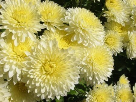 صور زهور جميلة , ارق الزهور التى تراها