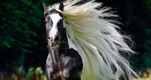 صورة اجمل صور خيول , اروع صور للخيول بجد