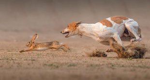 صور صور حيوانات مضحكة , اجمل طرائف الحيوانات بالصور