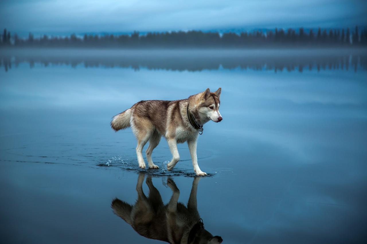 صورة احلى صور بالعالم , تشكيله رائعه من الصور في العالم