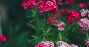 صور صور خلفيات جميلة , اجمل صور الخلفيات عن الطبيعه
