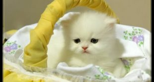 صور صور قطط متحركة , اجمل صور لانواع القطط