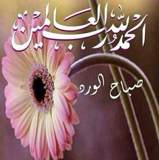 صورة صورصباح الخير , اجمل صور لصباح الخير