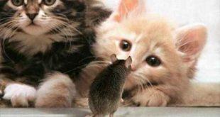صور صور قطط مضحكة , طرائف مضحكه عن القطط