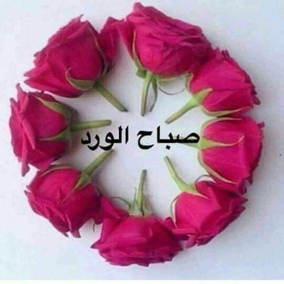 صورة صور صباح الورد , الورد في الصباح ومدي تاثيره