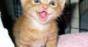 صور صور قطط صغيرة , اشكال القطط الصغيره