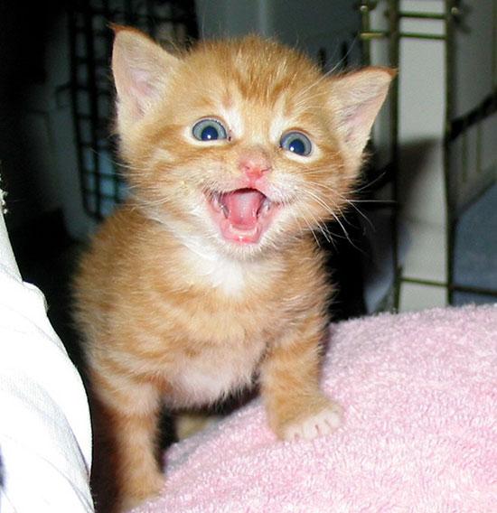 صورة صور قطط صغيرة , اشكال القطط الصغيره