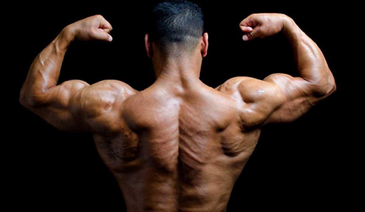 صورة صور عضلات قويه , العضلات تجعل الجسم جذاب وقوي