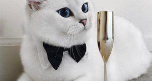 صورة قطط كيوت , واو قطط مذهلة وجذابة