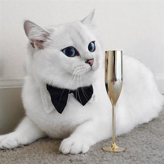 صورة قطط كيوت , اجمل القطط الموجوده في العالم