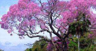 صورة اشجار جميلة , الاشجار تجعل الجو رائع وصحي