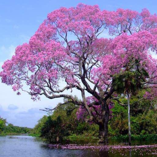 اشجار جميلة ما اروع تلك الاشجار الجذابة للغاية روح اطفال